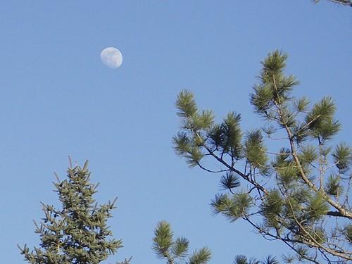 April Moon 2