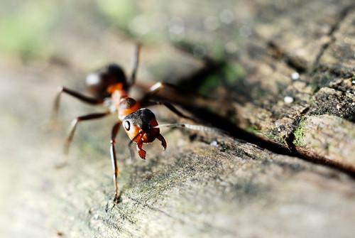diatomaceous earth a natural bed bug killer homemade natural ant killer. Black Bedroom Furniture Sets. Home Design Ideas