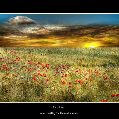 summer sky sun clouds sunrise cornfield sommer himmel wolken poppies sonne sonnenaufgang kornfeld cornflowers kornblumen mohnblumen