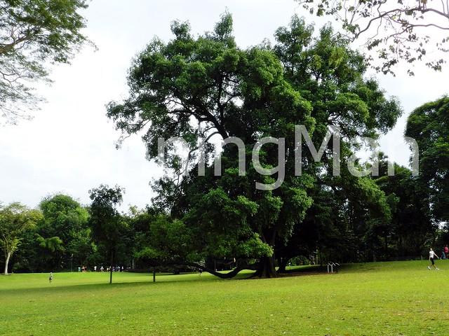 Singapore Botanic Gardens 02