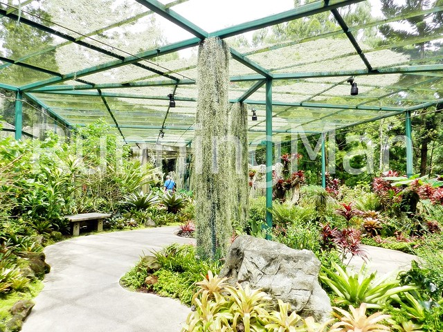 National Orchid Garden 04