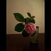 乙女椿 camellia by Masahiro Makino