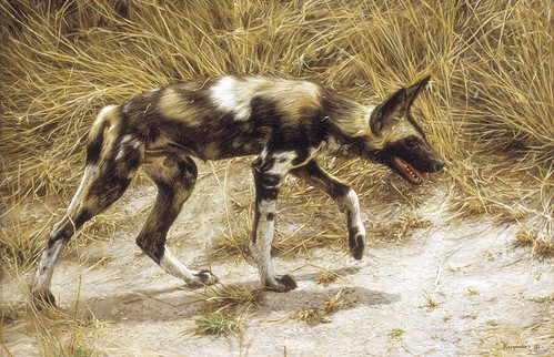 "'African Wild Dog' oil on board 8¼"" x 12¼"""