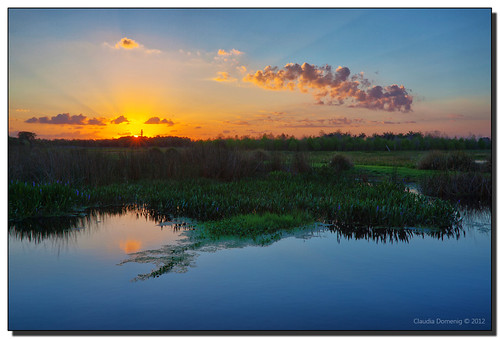 Wetlands Sunrise