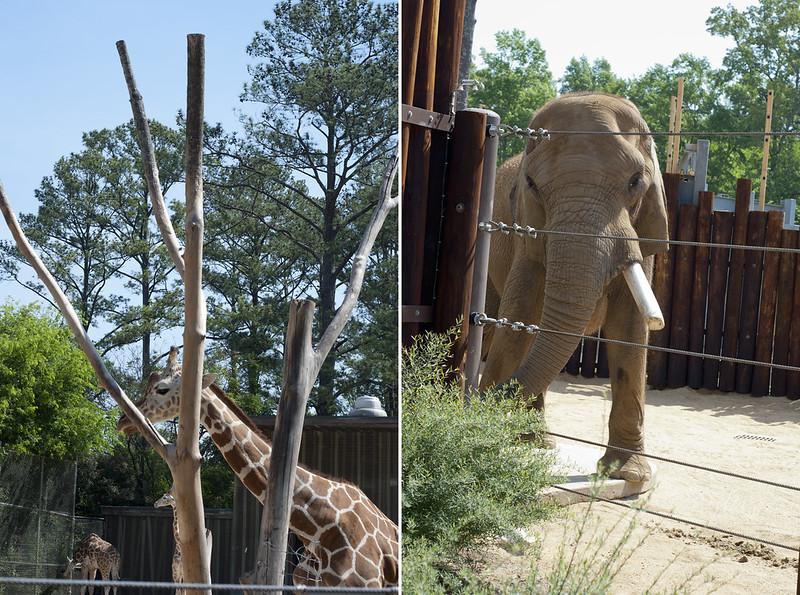 Giraffe&Elephant
