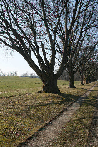 Kahle Bäume - Herreninsel
