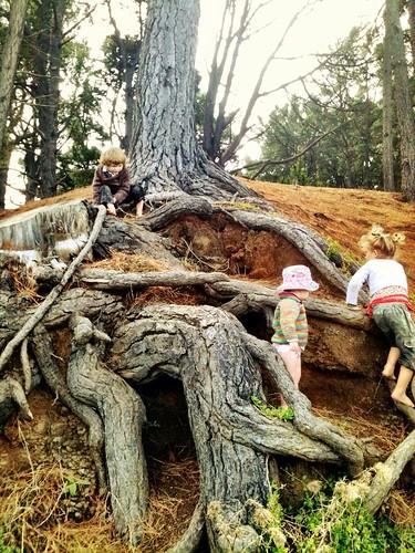 Climbing the pines