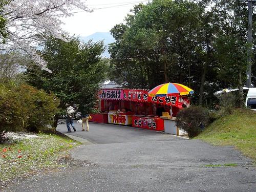 宗堂桜 #7