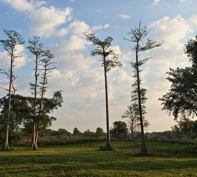 Bald Eagle nest Deerfield 20140425