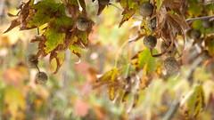 Antipodean Autumn