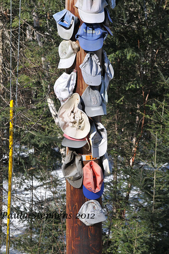 Hats on Telephone Pole by Paula Stephens