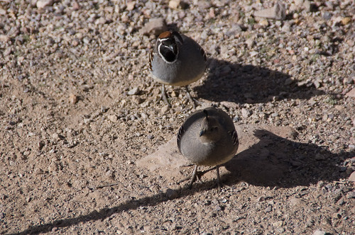 mrs and mr quail