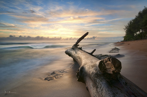 ocean sky tree beach water clouds sunrise hawaii coast log sand surf ls kapaa kauaii nothdr