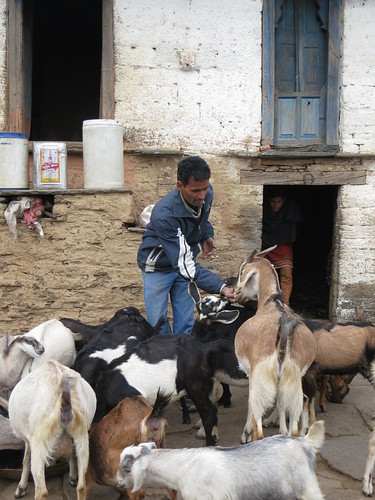 Goat keeper in India's northern state of Uttarakhand