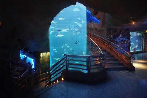 The Downtown Aquarium