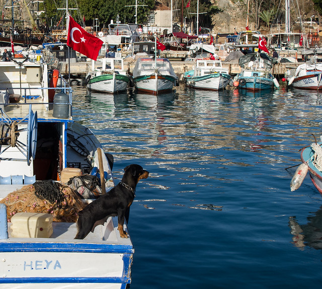 Guard Dog in Antalya Harbor
