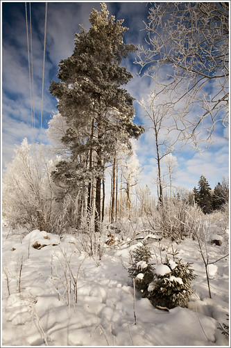 20120211. Frosty forest. 3854. by Tiina Gill
