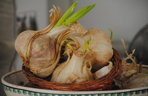 image-sprouted-garlic-cloves