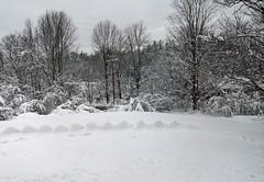 Snow_3212c