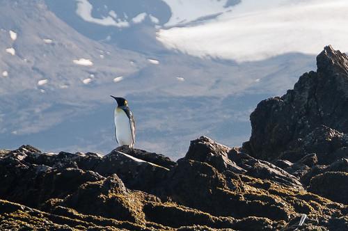 landscape rocks southgeorgia kingpenguin prionisland