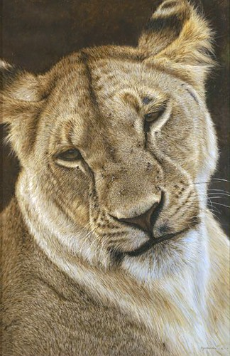 "'Lioness Portrait' oil on board 16"" x 10¾"