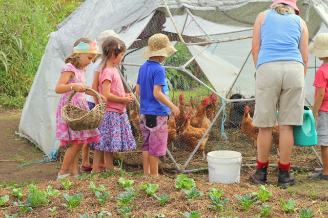 Purple Pear Organic Farm Birthday Party - Feeding the chickens