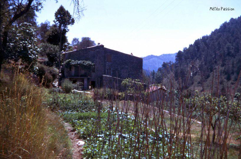 légumes en terrasses dans l'arrière-pays niçois en mars 1974 météopassion