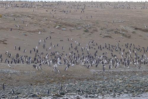 Punta Arenas-37
