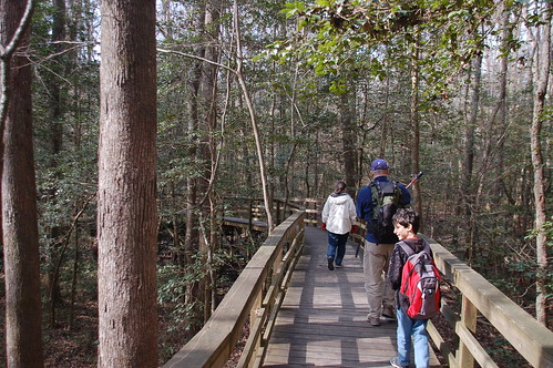 Starting out on the Congaree Boardwalk