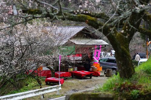 (7)梅と茶店