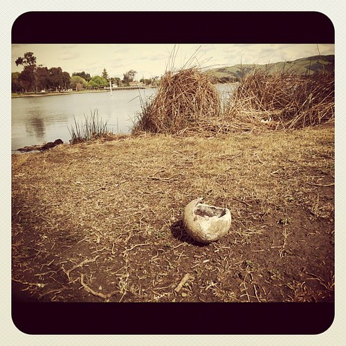 #SignsOfSpring : Looks like we have a baby bird at Lake Elizabeth in #Fremont #fb