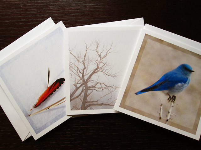 Zen nature card set, of minimalist square blank cards featuring a mountain bluebird, a flicker feather, and a bare tree on a foggy day.