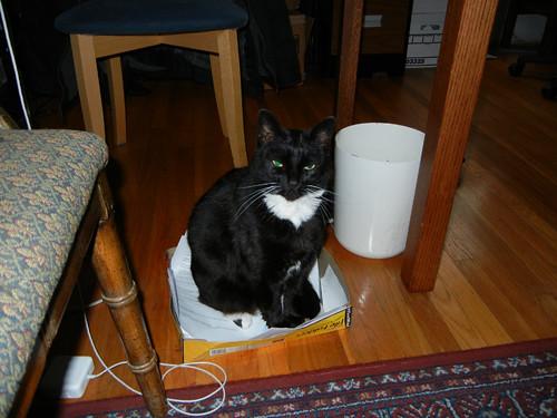 Cat _ 0137