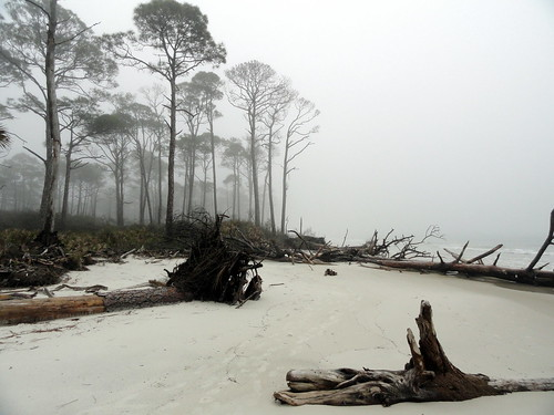 Sugar Sand, Trees & Fog