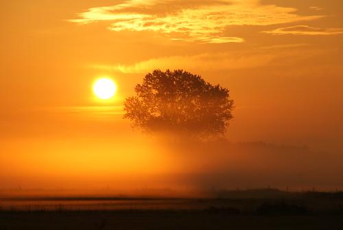 [フリー画像素材] 自然風景, 朝焼け・夕焼け, 樹木, 霧・霞 ID:201204092000
