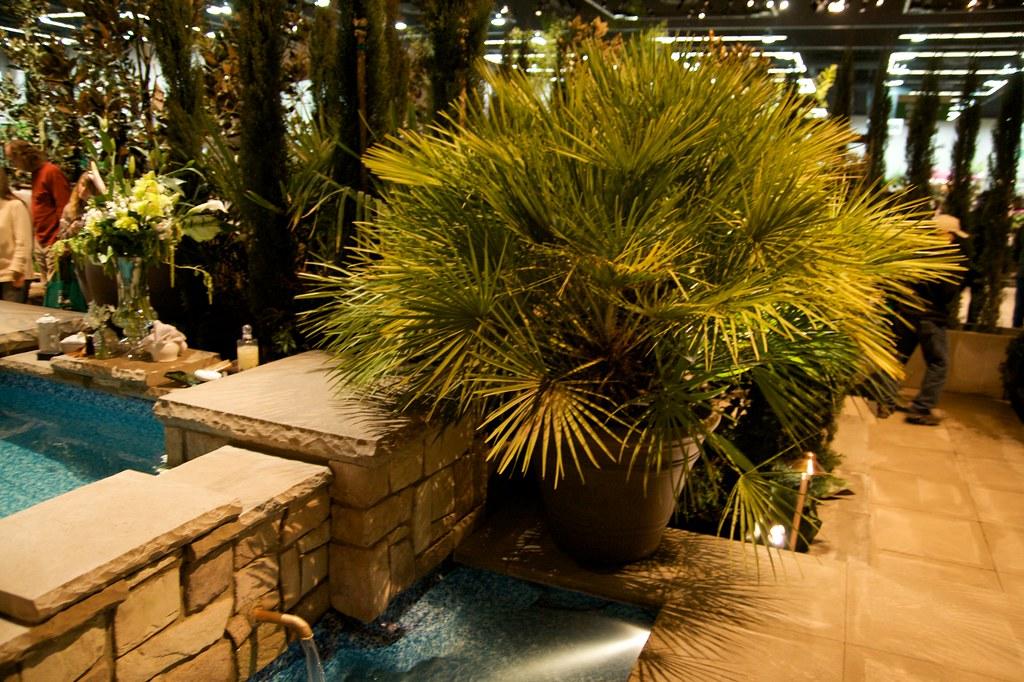 potten palm  1257