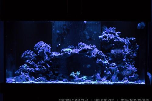 night scenes from rachel's marine acquarium    MG 8815