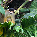 Squirrel Monkey (Kiera Griffin)