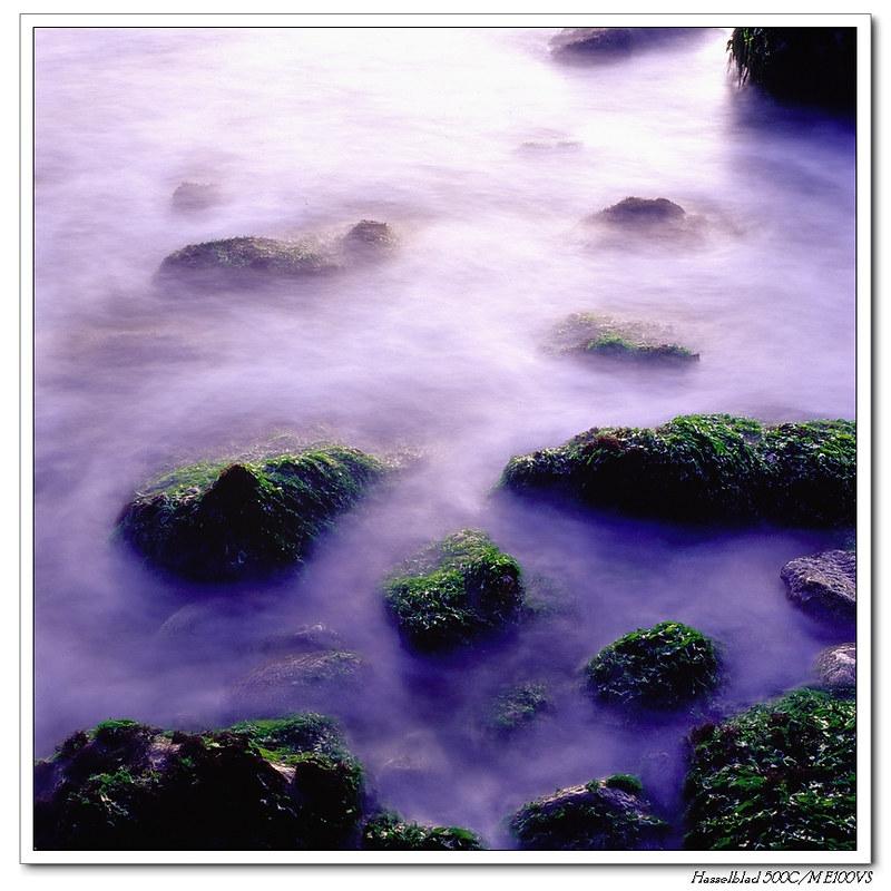 高雄西子灣綠藻(銀鹽)