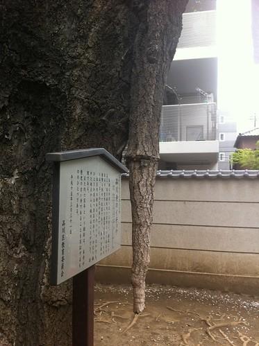 Estalactica arborea
