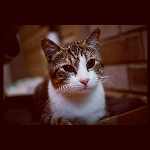Kitty #straygray