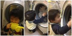 とらちゃんと洗濯乾燥機(2012/3/2)