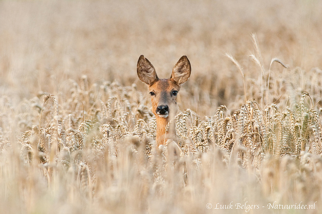 Beautiful nature photography by Luuk Belgers