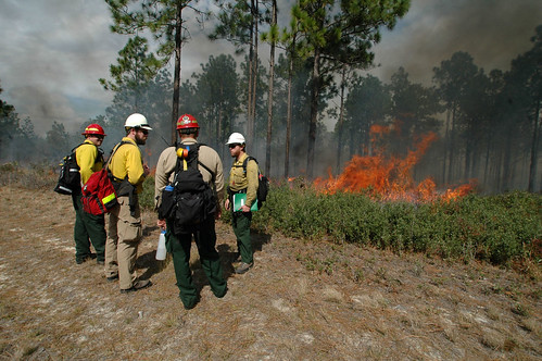 Fire specialists from the Ocala National Forest and the Prescribed Fire Training Center answer questions from a Moroccan delegation of natural resource specialists during a prescribed burn demonstrating fire management techniques. Photo Credit: Susan Blake, Public Affairs Specialist, National Forests in Florida