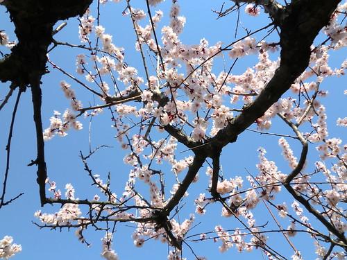 20120328小石川植物園-126