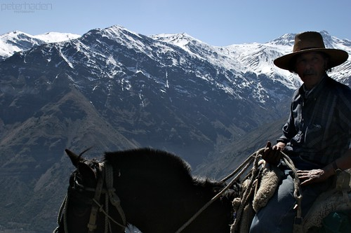 chile portrait horse mountains animal work cowboy alone hand andes huaso islanegra