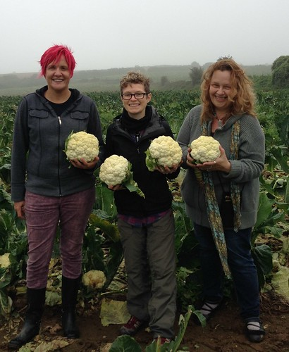 Cauliflower gleaning