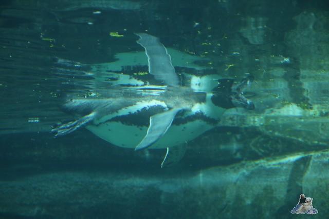 Eisbär Lili im Zoo Bremerhaven 30.04.2016 Tei 1  86