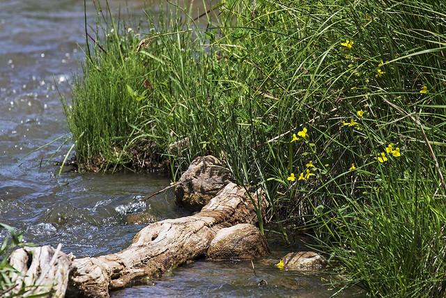 Verda River 18-7D2-050516