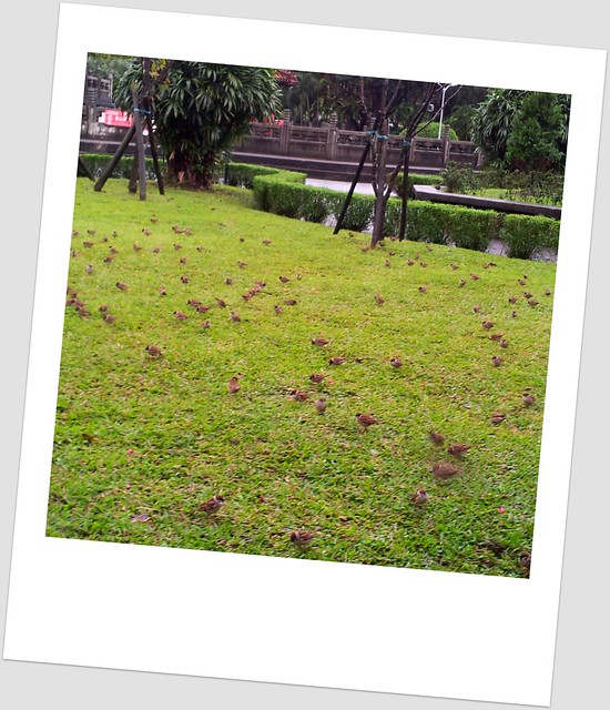 雨中的麻雀